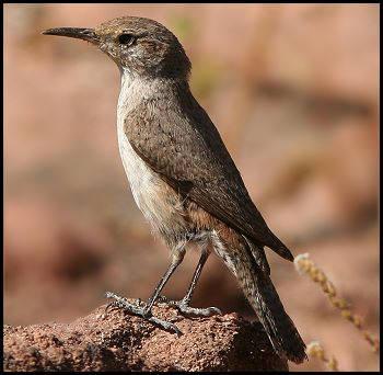 kinds of birds
