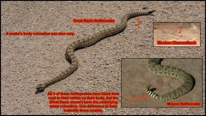 Identification of 3 Venomous Snakes
