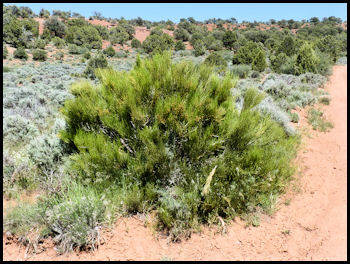 Listings Of Trees Bushes And Yuccas That You Are Likely