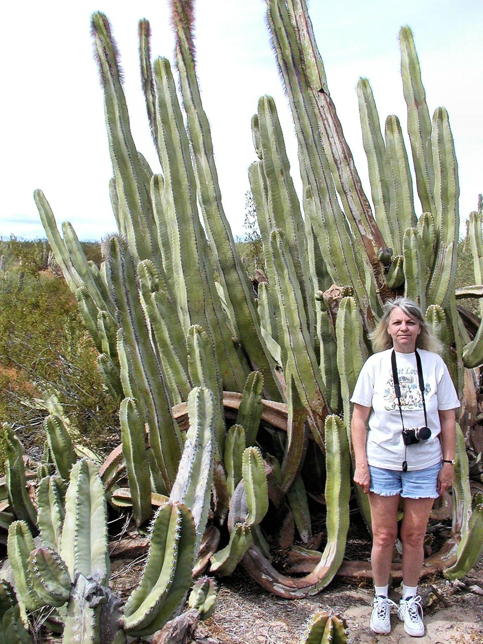 Magnifing Gl Buckhorn Cactus